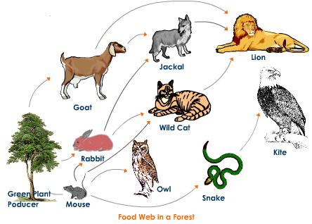 Animal Food Chain List